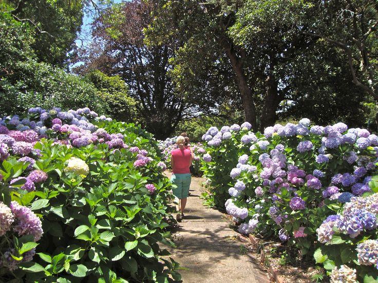 Arderne Gardens Claremont