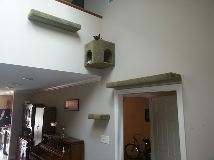 1000 Images About Cat Shelves Condos Trees Perches On