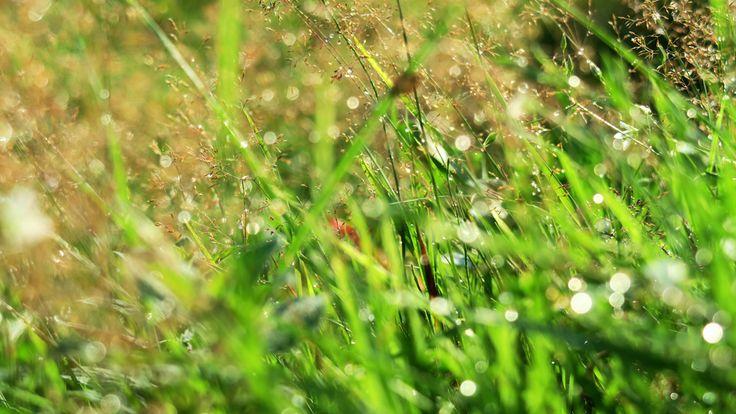 Łąka po deszczu - Siedlisko na wygonie na Mazurach