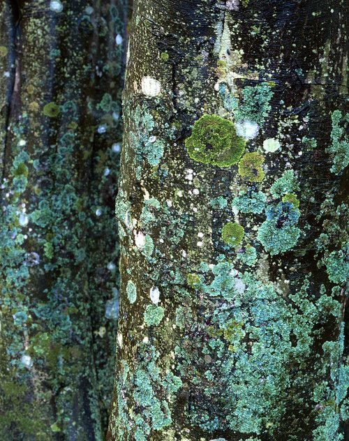 David Ward -- Beech trunks | Into The Light