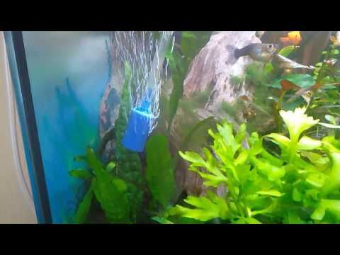 Jak se starat o akvárium #2 technika a organizace - YouTube