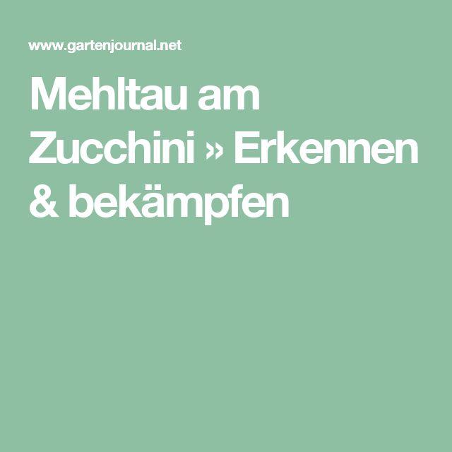 Mehltau am Zucchini » Erkennen & bekämpfen