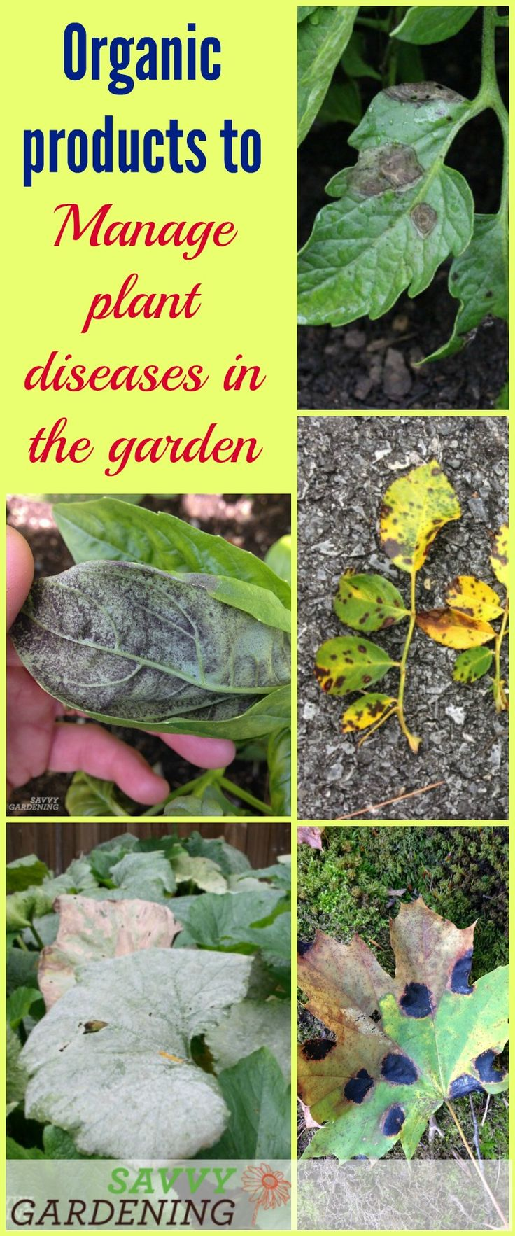 Prevent and control plant diseases in the garden with these organic products.