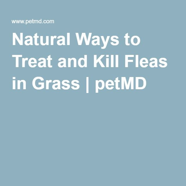 Natural Ways to Treat and Kill Fleas in Grass   petMD