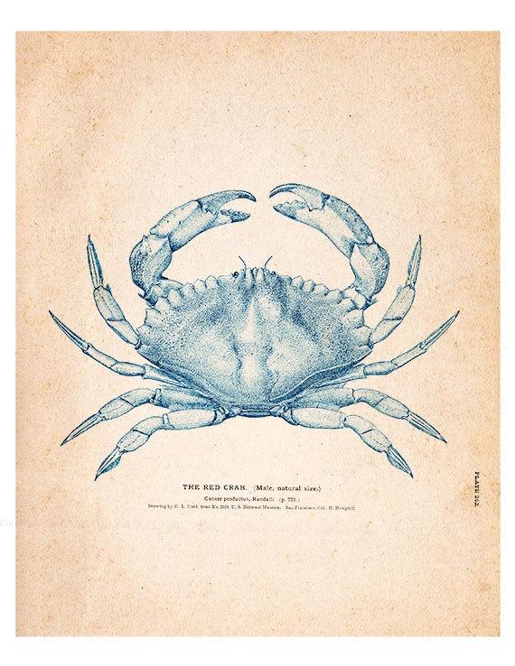Crab 04 Vintage Illustration by SeashoreDecors