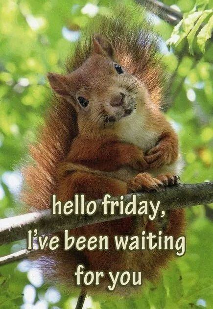 56 Best Images About Friday Fun On Pinterest The Friday
