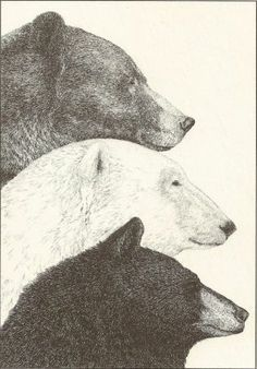 From Bears in the Wild, by Ada and Frank Graham. Copyrighted 1981 by Diane Dee Tyler.