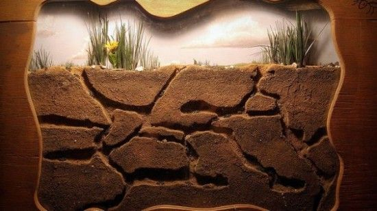 DIY ant farm