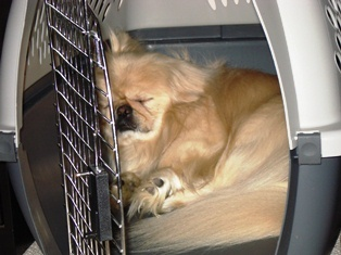 Delta Airlines Adds New Restrictions on Pet Travel