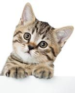 """Checkout Download """"Cats Video Site Builder"""" Free!!  Learn more here: http://mattmartin.club/index.php/2017/05/16/download-cats-video-site-builder-free/ #Blog, #Free_Offers """"Instantly Create Your Own Complete Moneymaking Video Site Featuring  Adsense and Amazon Ads, Unique Web Pages, SEO Solutions and Much More …Built Automatically in 2 Minutes Flat"""" Your professional looking site will include many powerful profit-boosting features ..."""