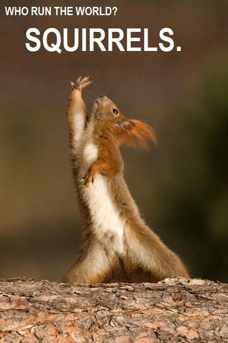 squirrelsFunny Squirrel, Laugh, Dance Squirrels, Aerobics Squirrels, Interpretation Dance, Humor, Things, Smile, Animal