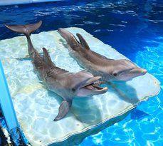 Clearwater Marine Aquarium   – Disney 2020