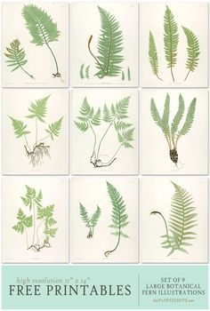Collection of 9 (high-res) fern botanical prints (11 x 14) for framing from | The Painted Hive