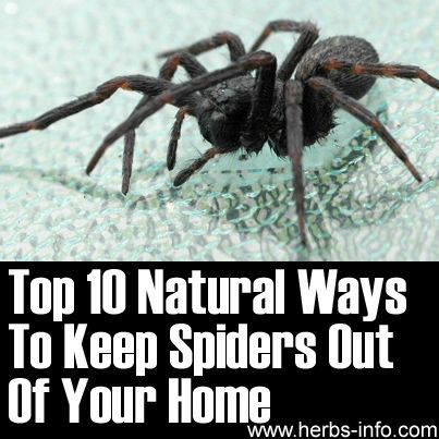 Top 10 Natural Ways To Keep Spiders Out Of Your Home