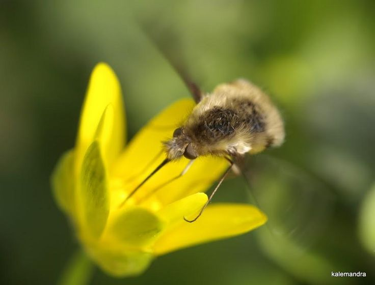 Slumber moth / Clickasnap