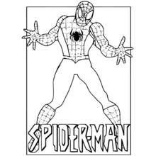 coloring page spiderman superheroes 67  printable coloring pages  spiderman coloring