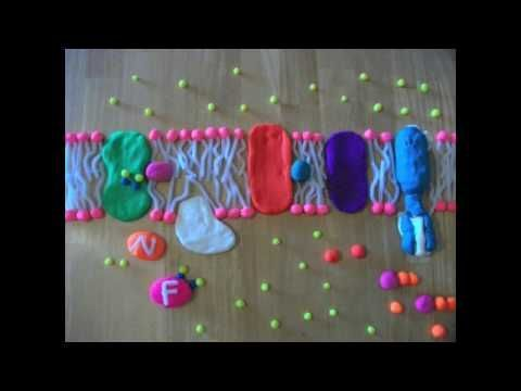 The Electron Transport Chain in really easy to see steps. We did this process for a project in one of our biology classes at the University of Washington. I ...