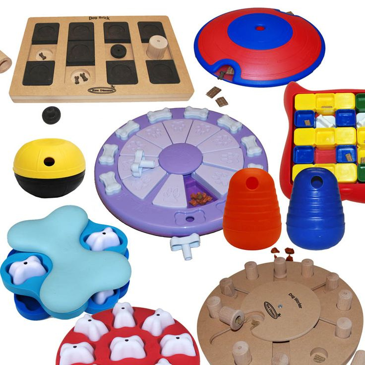 All dog puzzle games & toys- these things are the best for high energy dogs that need something to do