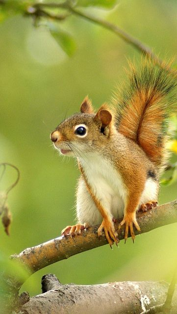 squirrel_branches_trees_sit_blurring_59740_640x1136 | Flickr - Photo Sharing!