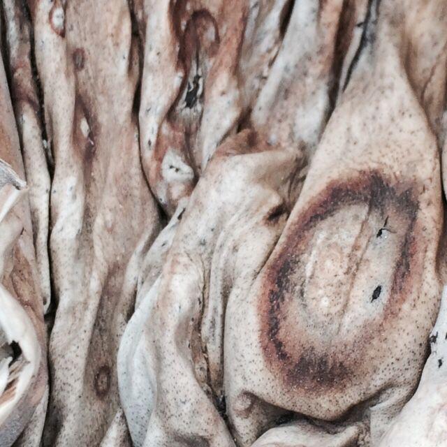Wood on Girona