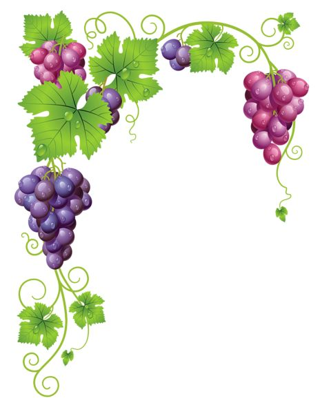 Transparent Vine Decor PNG Clipart Picture