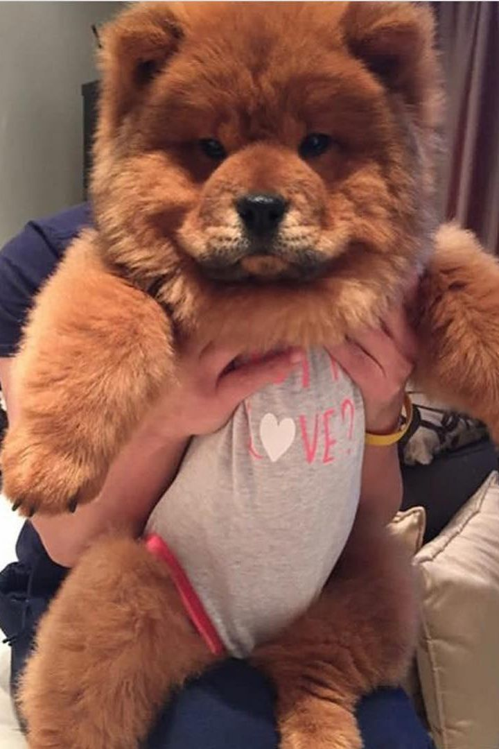 Are Pugs Hypoallergenic Hypoallergenic Dog Breed Hypoallergenic
