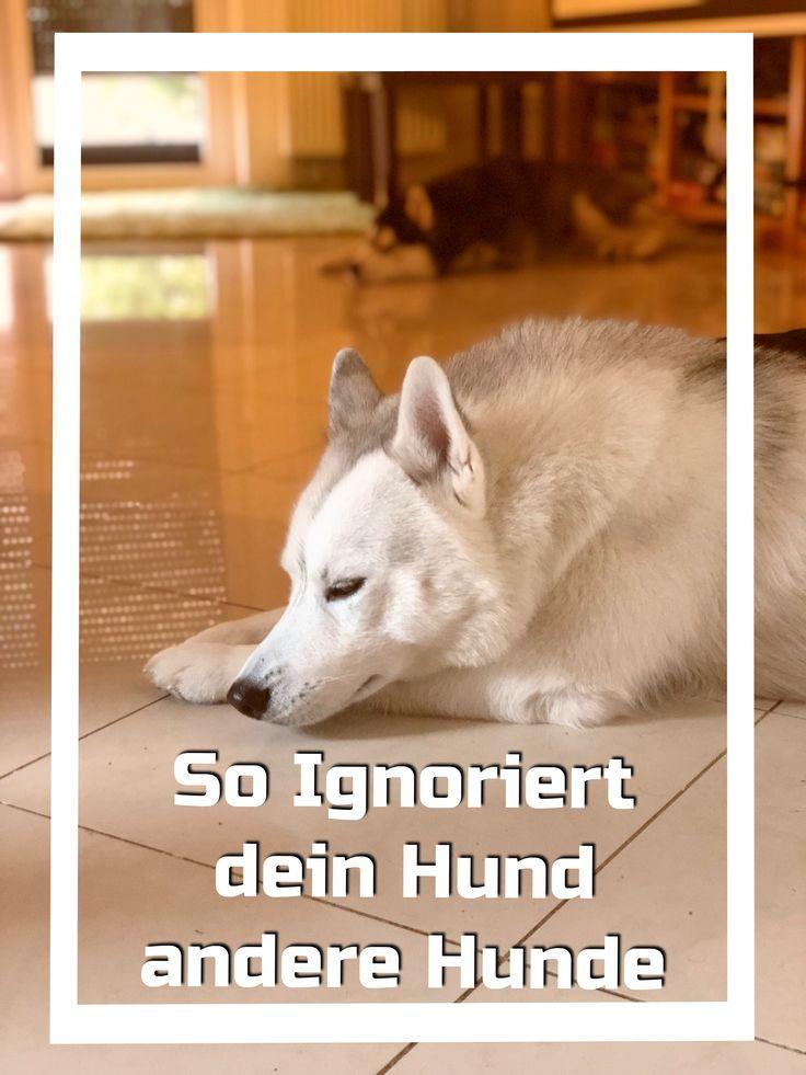 So ignoriert dein Hund andere Hunde