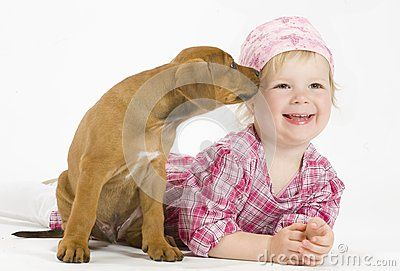 Adorable little girl in pink clothes with a little Rhodesian Ridgeback dog puppy. She is lying on her belly beside the puppy. The little dog is kissing her. The little puppy is five weeks of age. It is a purebreed african dog. Image is taken on white.