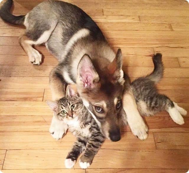 chaton et chiot adorables