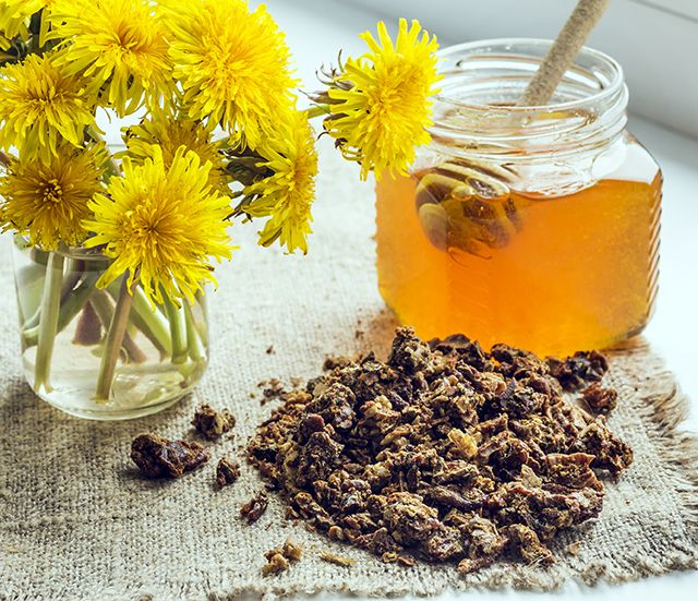 awesome Bee propolis: One of nature's most effective antibiotics