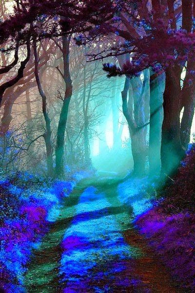 Mystic forest blue path