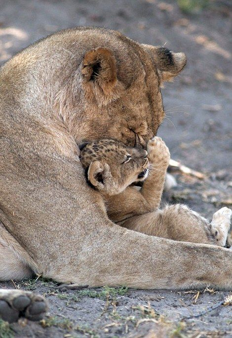 Mother's Day and charming pictures of the maternal bond between animals around the world | Daily Mail Online
