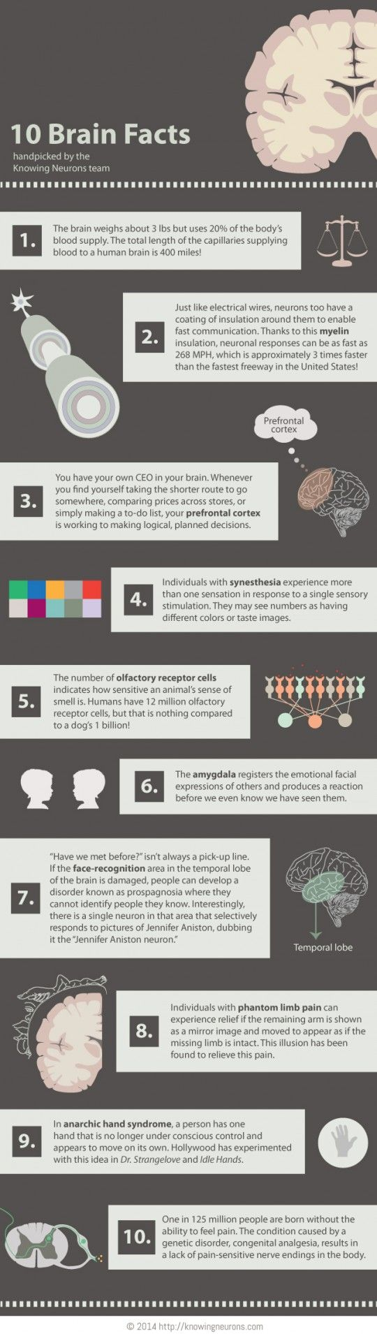 Want to learn about your brain?    http://brainspongeblog.com/2016/03/03/brain-infographic/