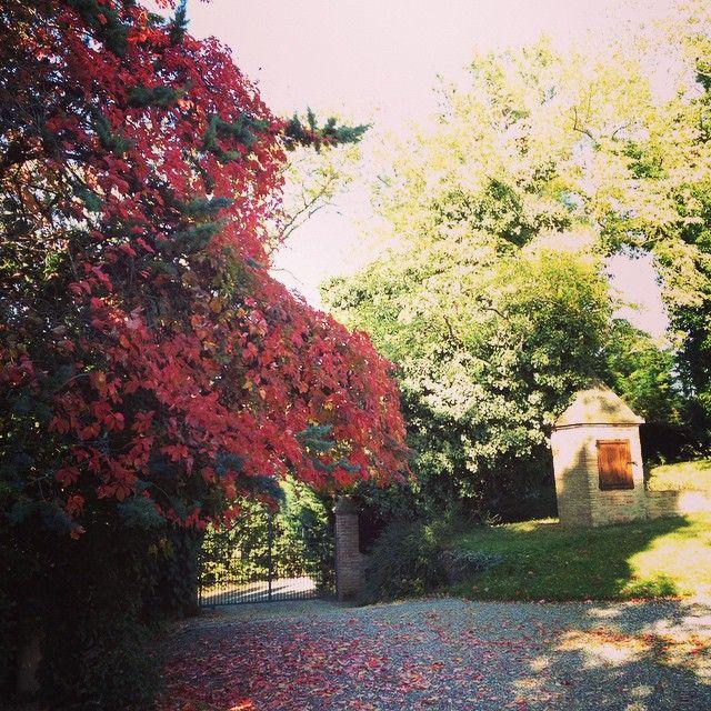 #agriturismosegarelli #agriturismotoscana #beauty #country #today #florence #firenze #holiday #italy #pisa #landscape #relax #sun #siena #tuscany #toscana #volterra @Luisa Quaglia