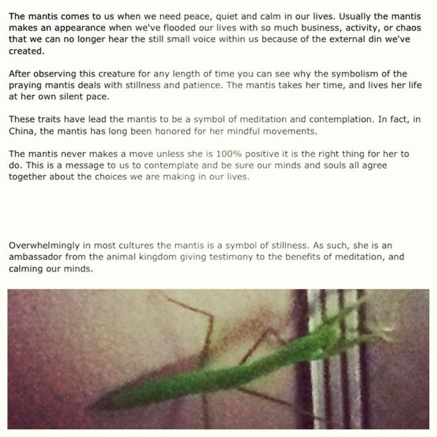 This praying mantis was in my living room today. Symbolic of rest, calm and peace....