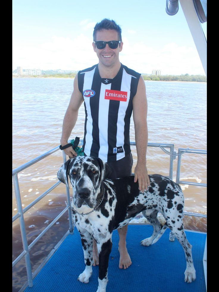 """Great Dane """"BIZZY"""" out on the boat #harlequin"""