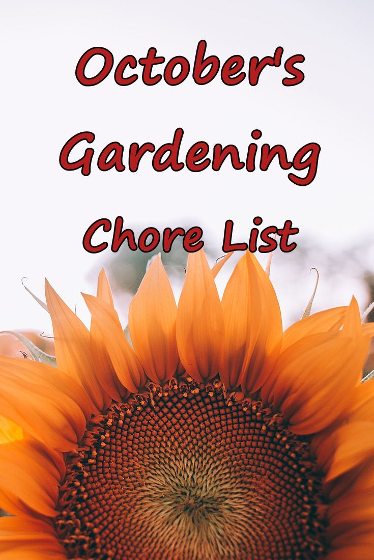 October's gardening chore list is short but will keep you busy getting ready for winter. #garden #october via @RobinFollette