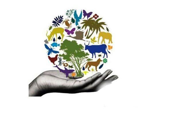 Conservacion De La Biodiversidad Y Su Importancia Medio Ambiente Conservacion De La Biodiversidad La Biodiversidad Clasificacion De Animales