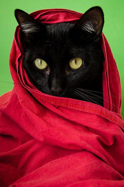 Black cat #blackcats #cats                                                                                                                                                      Mais