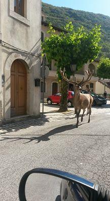 Le bellezze del Parco Nazionale d'Abruzzo Lazio e Molise...a dir poco fantastici...
