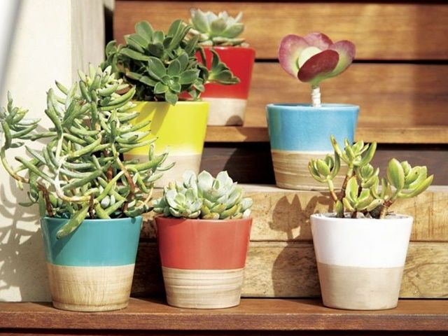 Mini indoor gardens ideas for anyone