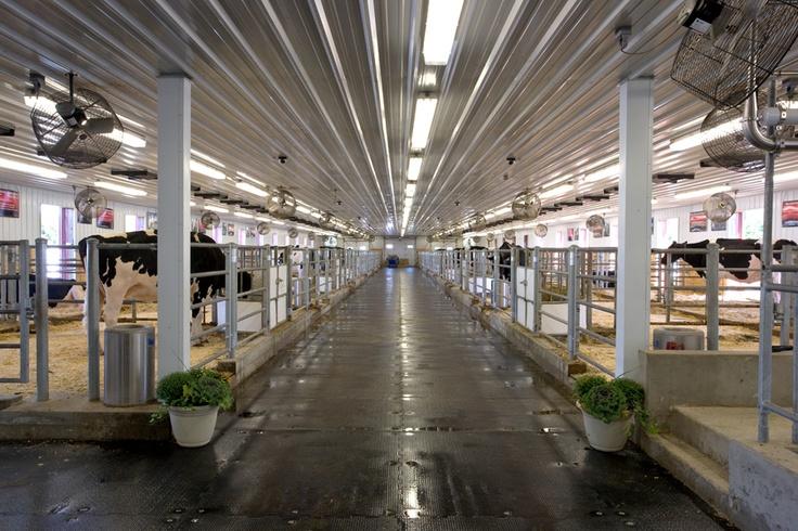 43 Best Cattle Barns Images On Pinterest Dream Barn
