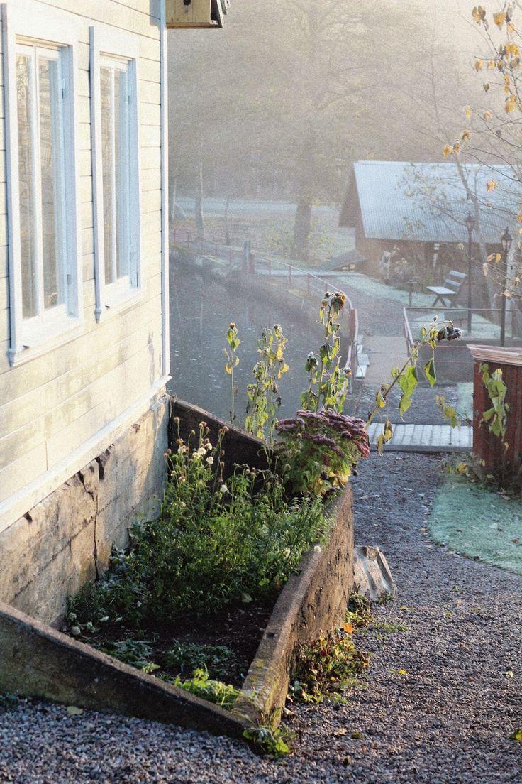 drivbänken i morgonljus