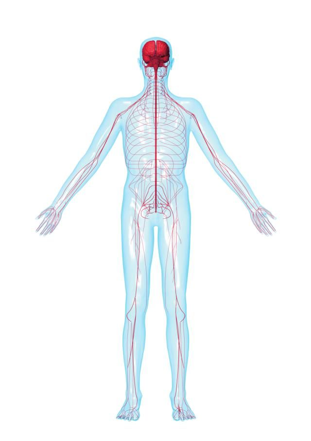 A five-part guide to peripheral neuropathy (damage to the peripheral nerves).