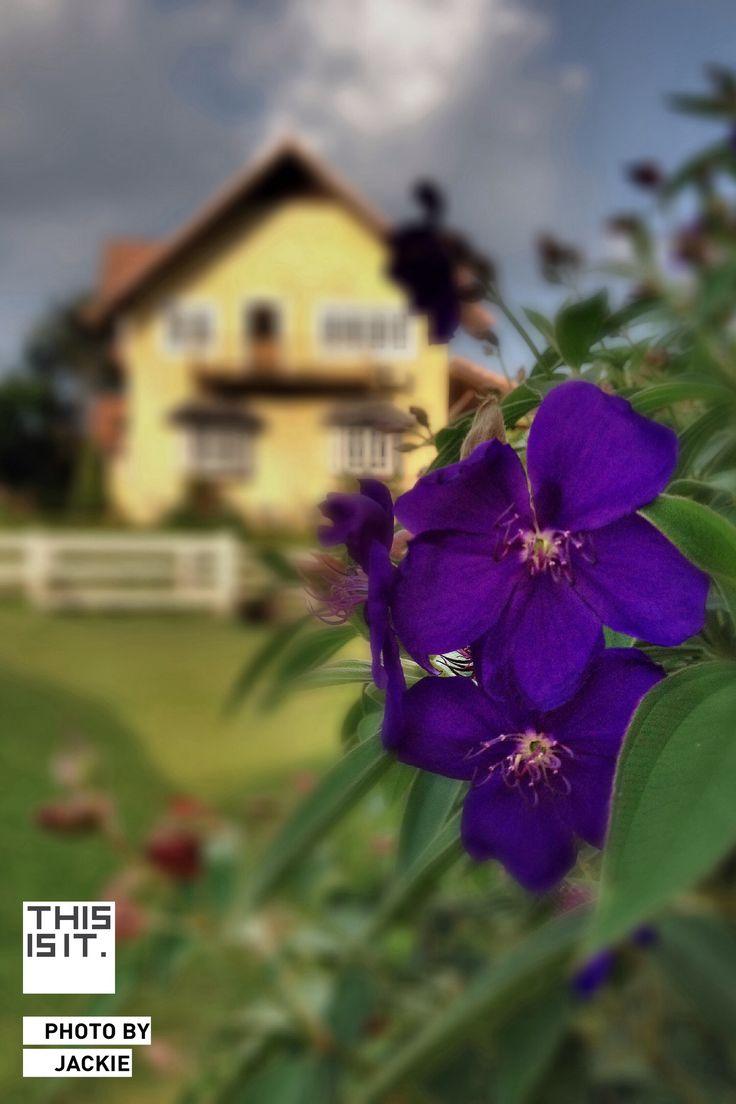 Purple of Love