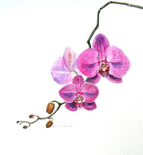 orchid tattoo inkd | tattoos picture orchid tattoo. the orchid represents love, beauty, strength, and luxury
