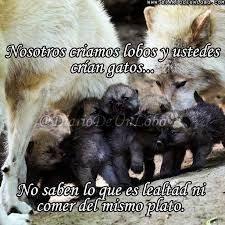 Resultado de imagen para lobos frases