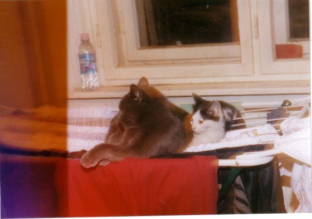 Bendegúz and Sylvester