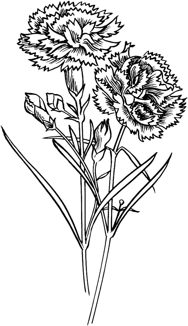 Flowers coloring pages printable - Carnation Flowers Coloring Page From Carnation Category Select From 24104 Printable Crafts Of Cartoons Nature Animals Bible And Many More