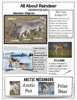Reindeer FREEBIE {Informational Text, Story, and Poem}